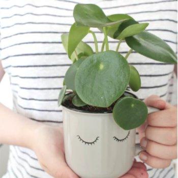DIY: Sukkulenten in Tassen pflanzen & bemalen